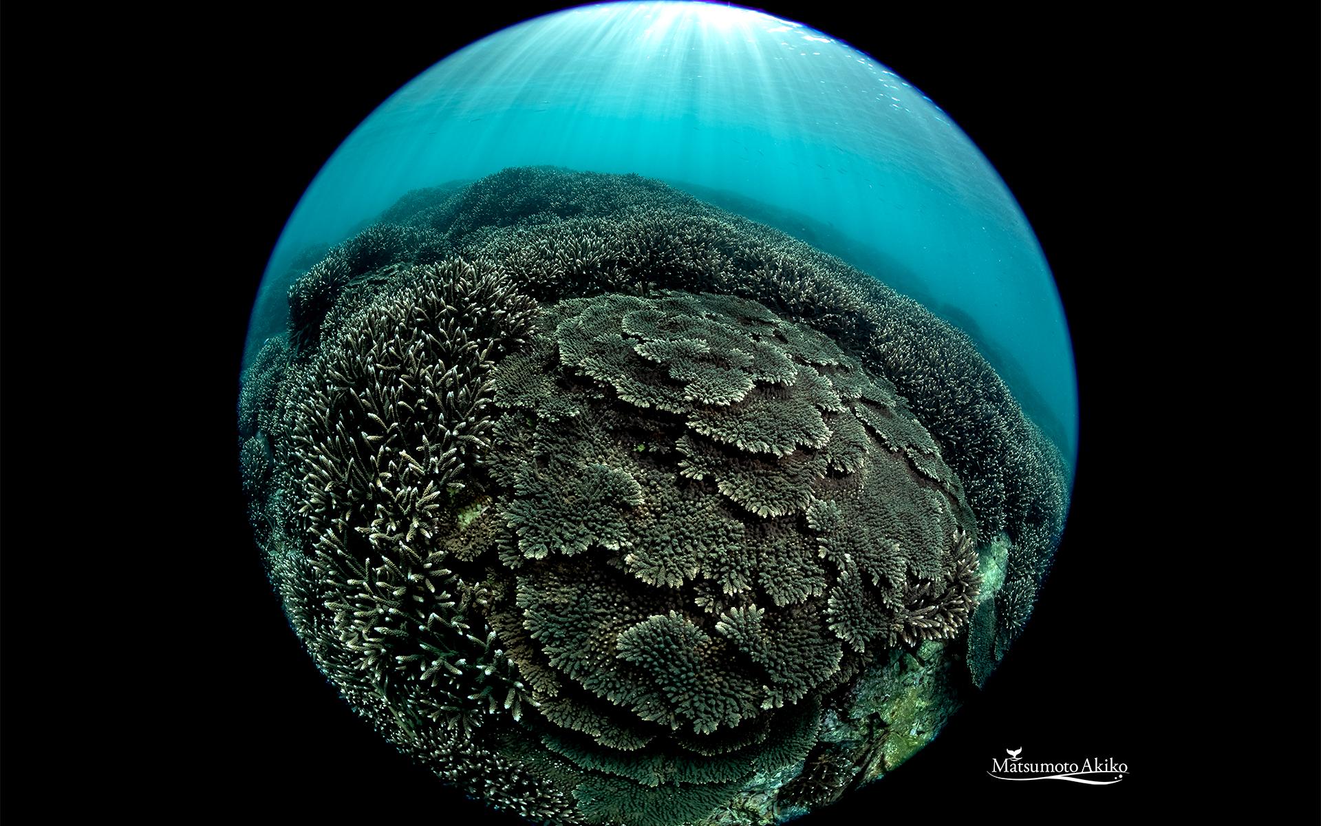 サンゴ円周