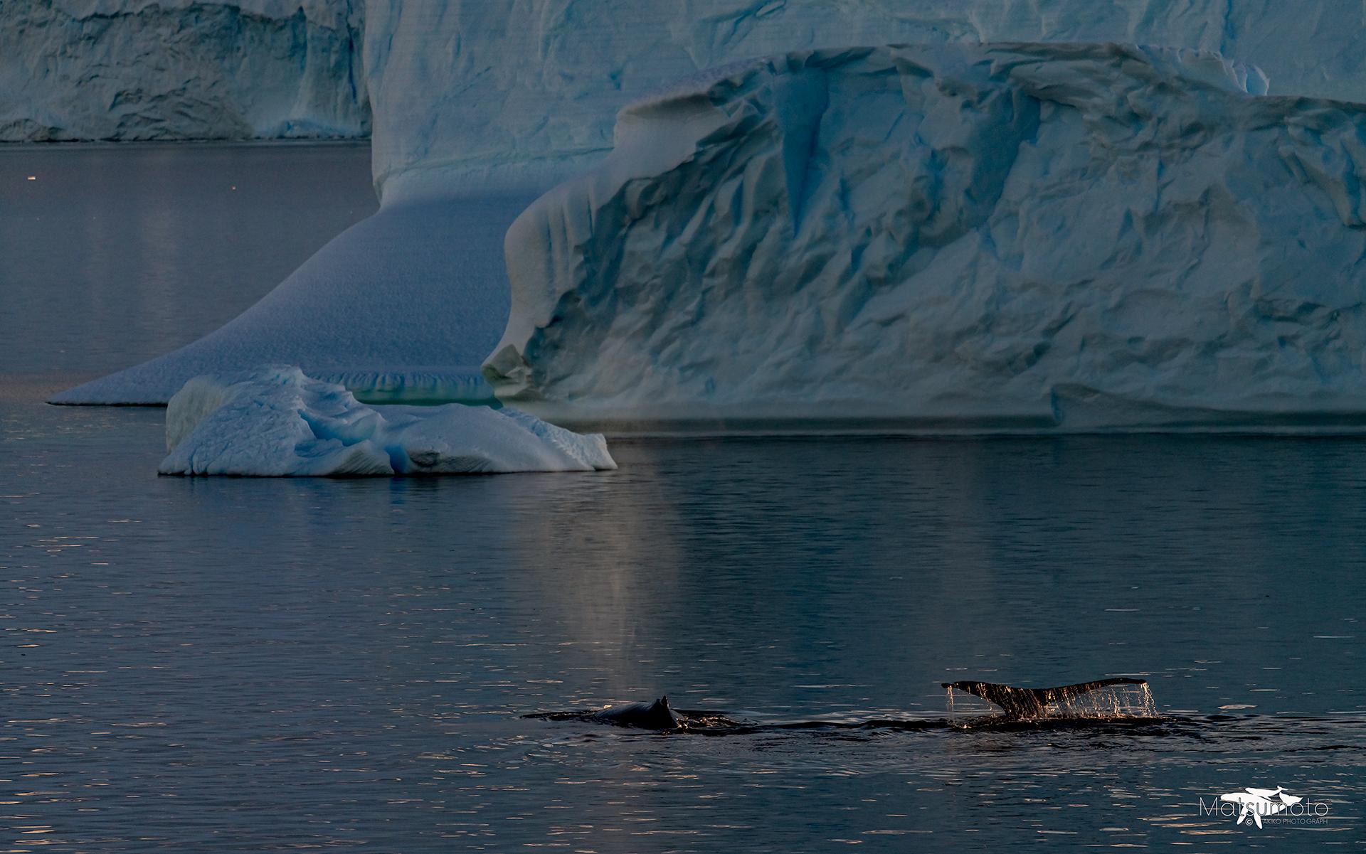 氷山 テール